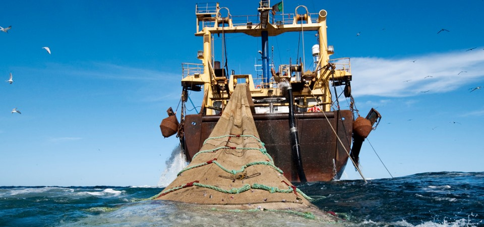 Pesci grossi e pesci piccoli. Come i giganti del mare stanno distruggendo la pesca.