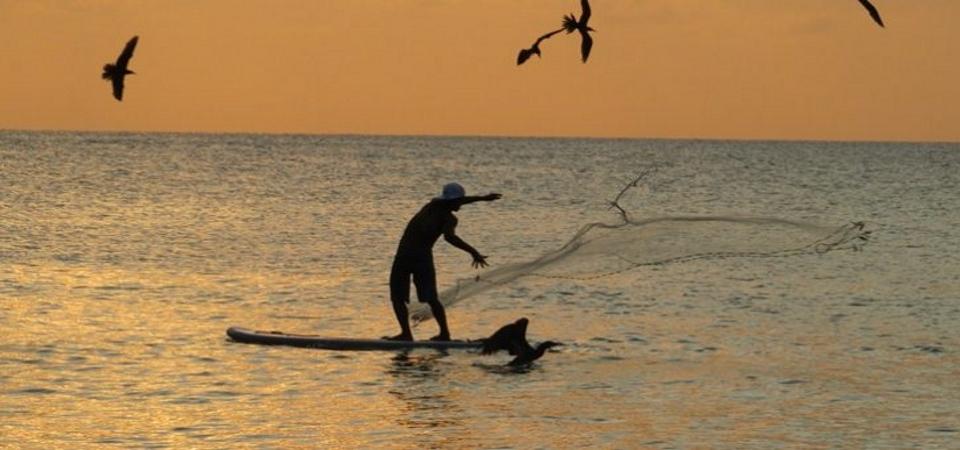 Fino all'ultima sardina: gli esperti chiedono lo stop alla pesca