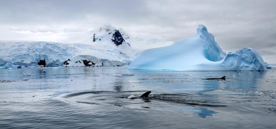 Sostieni anche tu la campagna Greenpeace per creare la più grande riserva marina del mondo in Antartide