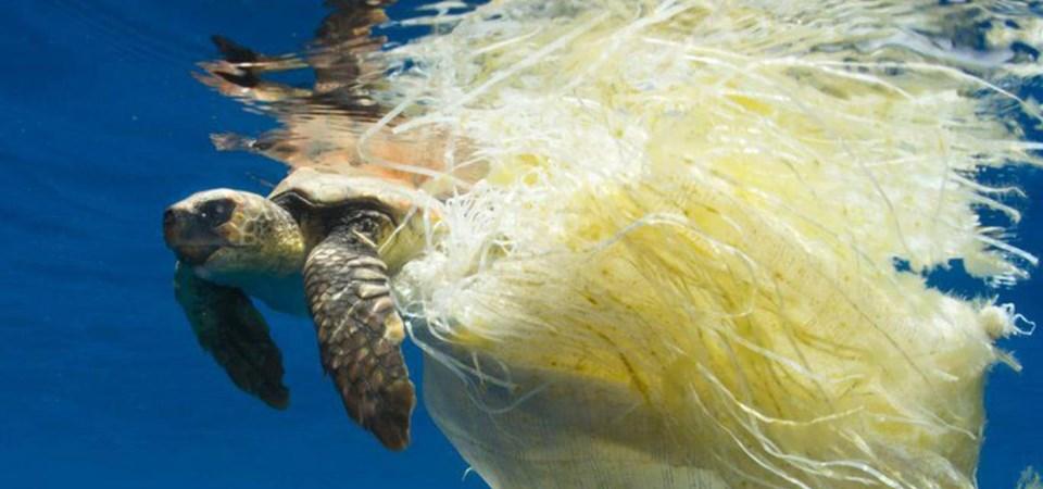 """Onu, verso la """"fine"""" della plastica usa e getta in mare, ma piano"""