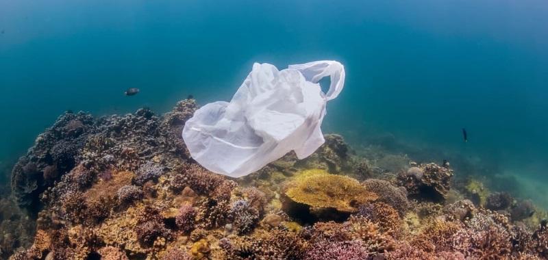La Plastica che mangiamo