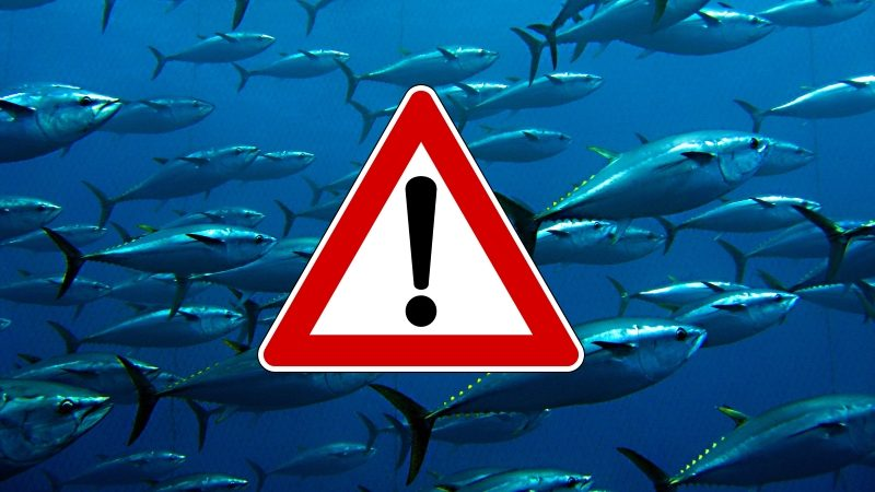 Una domanda inquietante… le video denunce sullo stato di Mari e Oceani promuovono la tutela della Biodiversità?