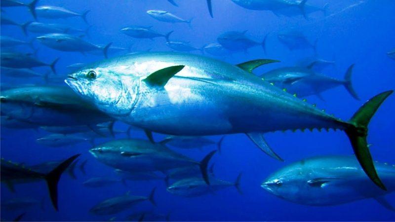 Clima, nel Mediterraneo a rischio la metà delle specie chiave