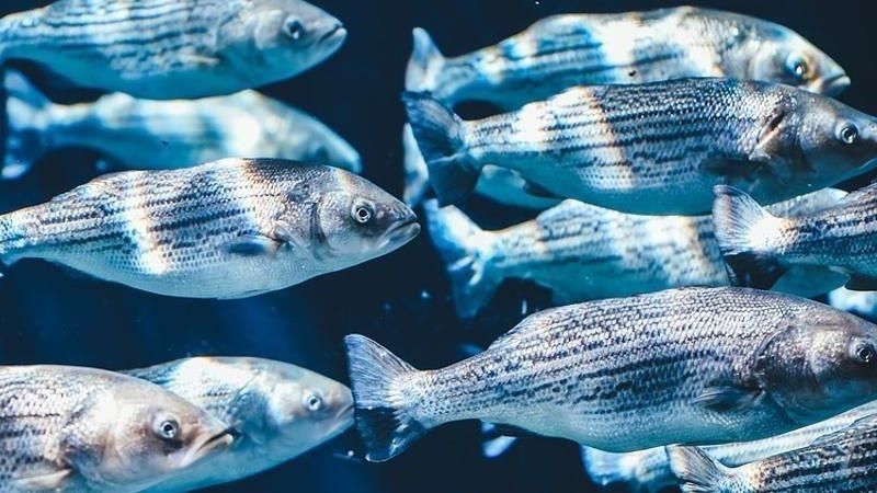 Riserve ittiche ai minimi. La mossa salva-oceani è il taglio dei sussidi alla pesca