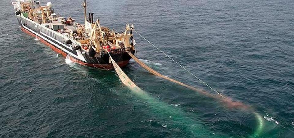 La pesca a strascico: una tragedia crudele che si consuma sui fondali, sulle barche da pesca… e che  alla fine genera estinzione di organismi marini ed attività umane connesse.