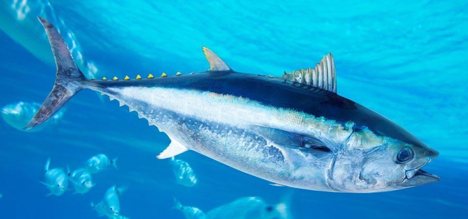 Ma i pesci che ancora abboccano… stanno in mare o sono dei bipedi a terra?