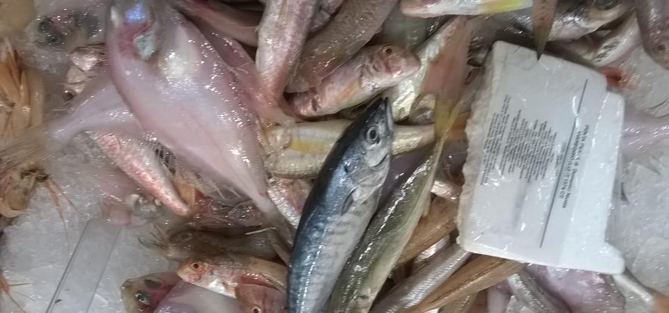 """Per due """"Palanche""""… rubate all'ambiente marino, si possono anche ignorare le leggi sulla pesca"""