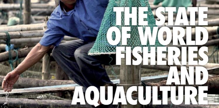 Rapporto FAO: Lo stato del mondo pesca e acquacoltura