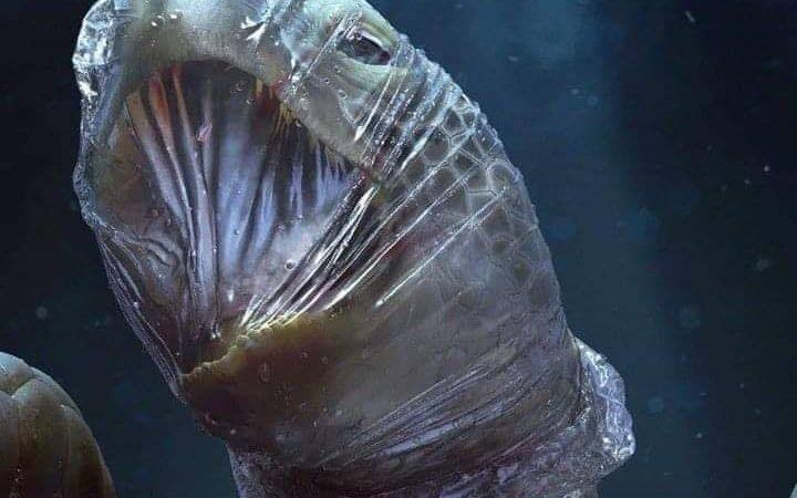 Petizione Permettiamo ai pescatori di pulire il mare