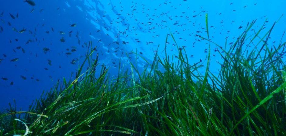Pescare meno e meglio, coltivare alghe e più molluschi
