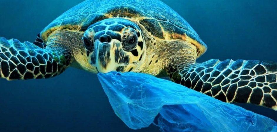 Strategia Marina: la plastica è il nemico numero 1 dei nostri mari