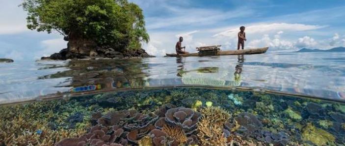 L'estinzione negli oceani corre due volte più veloce
