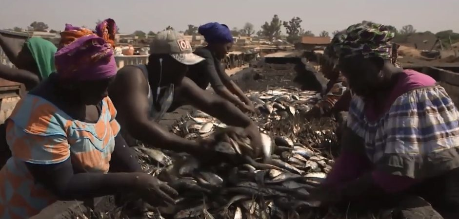 Video Documentario – Senegal: i predatori del mare