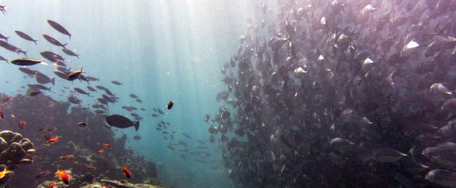 Giornata mondiale degli oceani: prendiamoci cura del mare