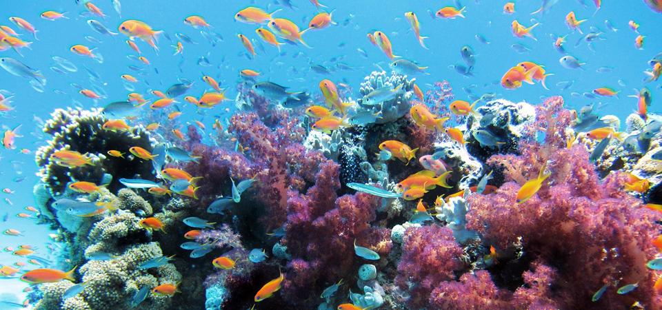 Greenpeace: Sostieni il Tour 2020 – Difendiamo il Mare, ti porteremo con noi in un viaggio alla scoperta della bellezza che dobbiamo proteggere